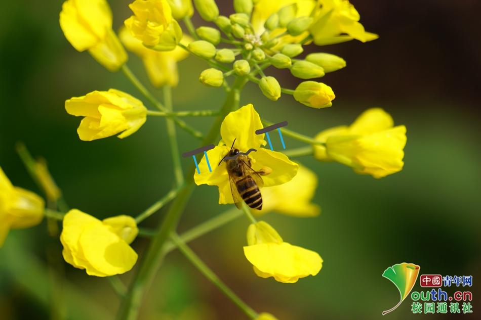 09 小蜜蜂呀,旁边花儿那么多,为何只扎我呢?